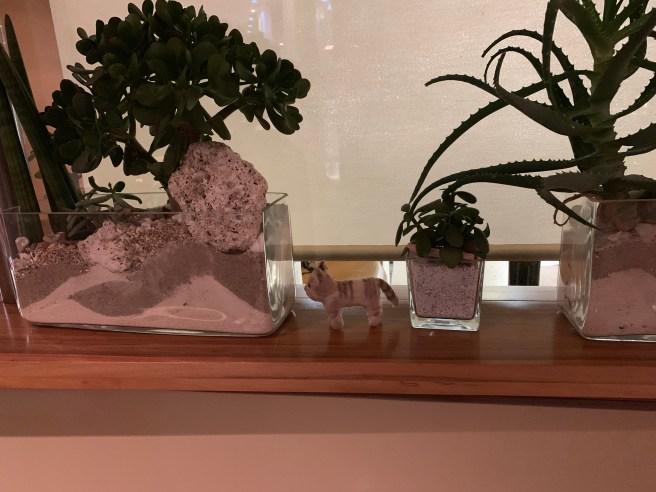 Frankie found plants
