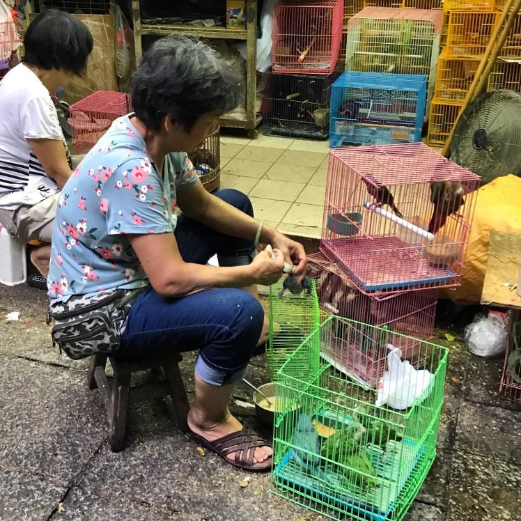 Bird seller feeding a baby parrot at the Hong Kong Bird Market