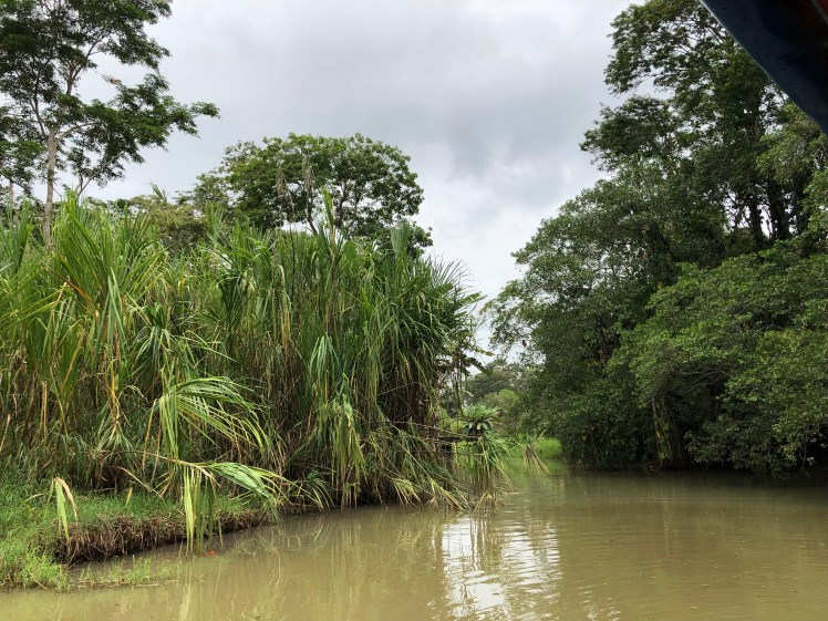 Costa Rican rainforest was suddenly all around us as we floated down Tortuguero Canals