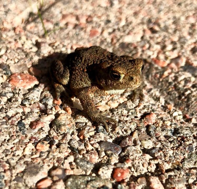 Frog enjoying sun