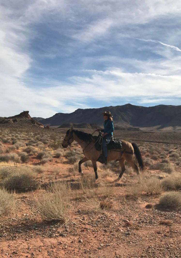 Reno Rodeo Wild