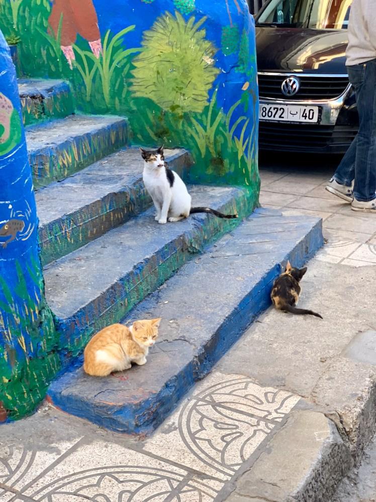 Cats of Tangier's Medina