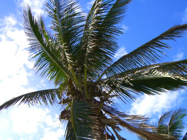 Palm tree in Miami
