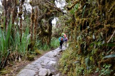 Cloud forest on day 2 of the Inca Trail