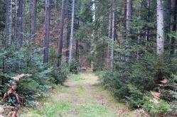 Black Forest 004