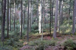 Black Forest 027