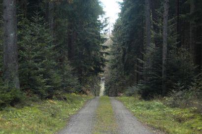 Black Forest 049