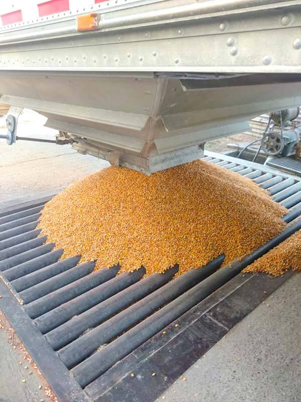 Sending the corn to dry, so it can be ground into feed and sold.