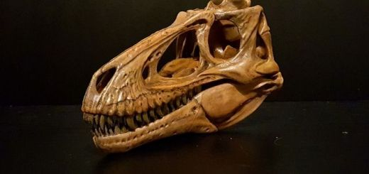 paleo creations 3d printing dinosaur skulls