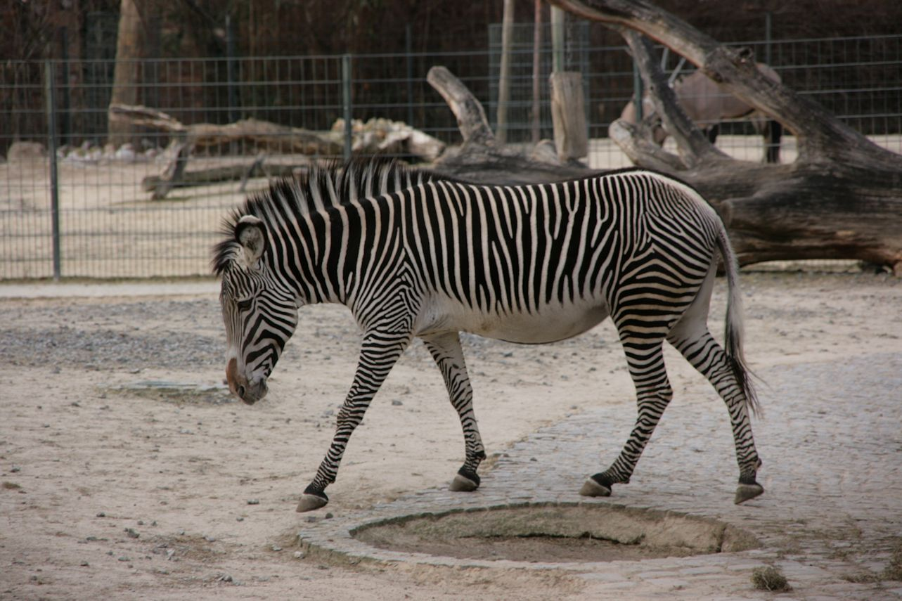 Mammal Monday 22 More Hooves From Marwell