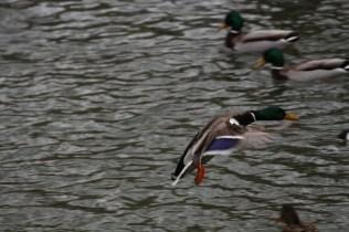 quackmire_08