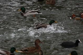 quackmire_11