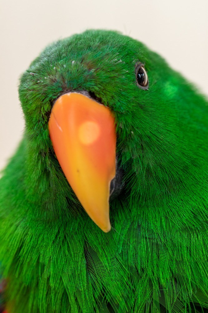 dinosaur-world-bird-park-12
