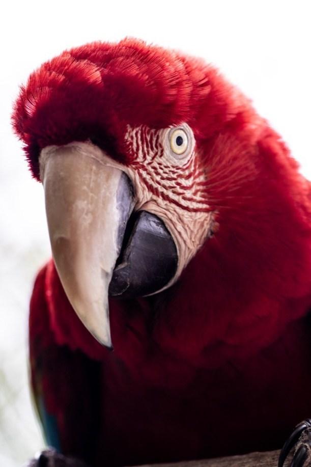 dinosaur-world-bird-park-3