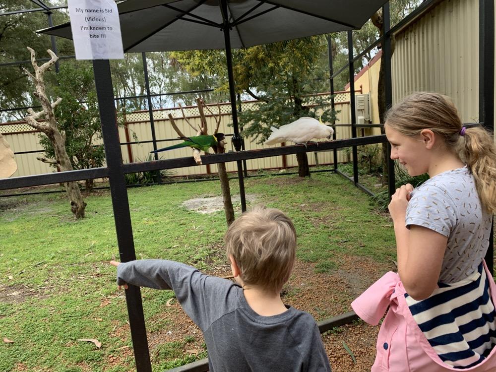 dinosaur-world-kangaroo-park-5