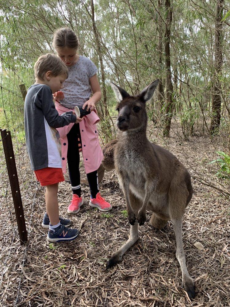 dinosaur-world-kangaroo-park-8