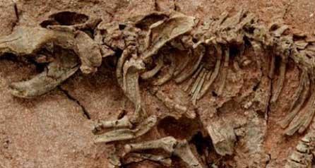 Динозавры находки археологов