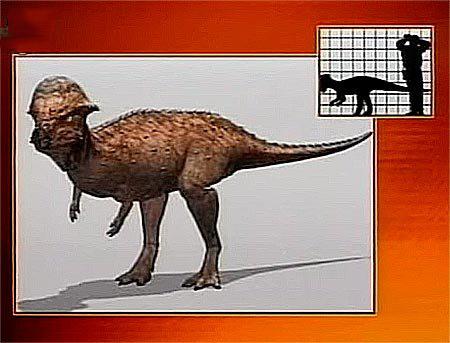 Пахицефалозавры
