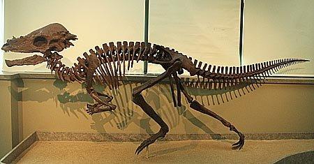 Пахицефалозавр: семейство