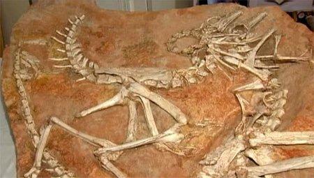 19 основных фактов о динозаврах