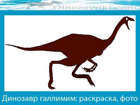 Галлимим динозавр: раскраска, фото
