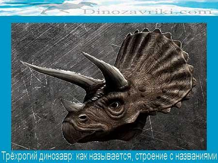 Динозавр с рогами: как называется, строение с названиями