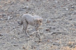 cheetah-park-nambia-231