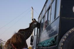 cheetah-park-nambia-677