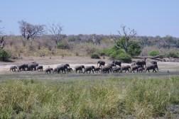chobe-national-park-zimbabwe-1157