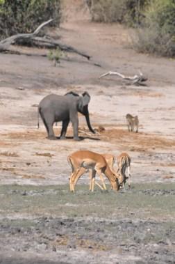 chobe-national-park-zimbabwe-405