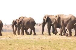 chobe-national-park-zimbabwe-486