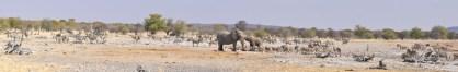 etosha-4-namibia