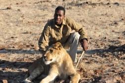 zimbabwe-lion-walk-108
