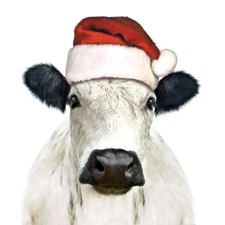 Christmas Cow Dipingo Designs Top Festive Design