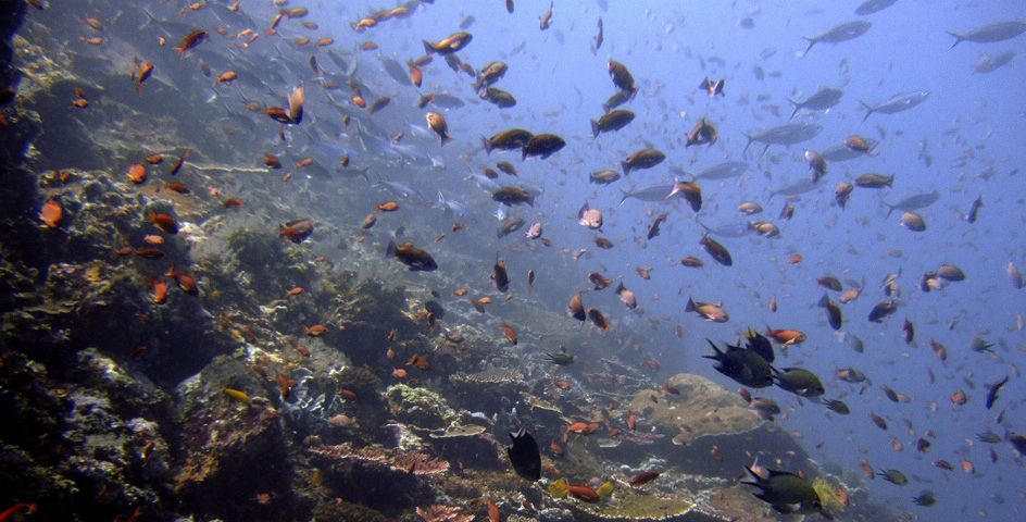 As many as 100 million people risk losing their homes and livelihoods unless steps are taken to protect coral reefs.