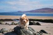 Bertie on Islay