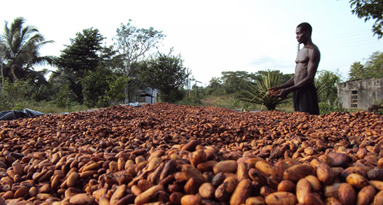cocoa_ghana