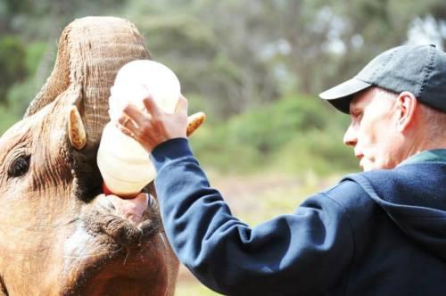 Amb. Godec feeds the Matriarch of the baby elephants at the Orphange. — at David Sheldrick Wildlife Orphan Trust. Photo via US Embassy Nairobi/FB (click on image to view more photos)