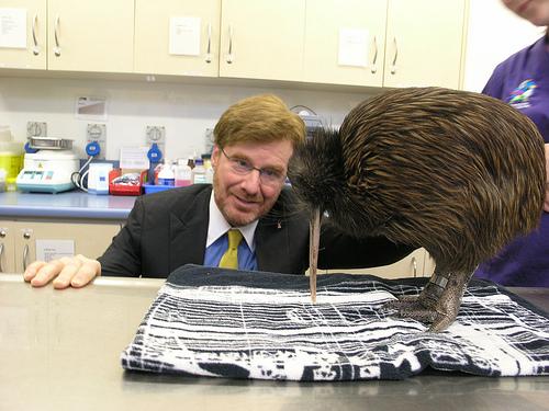 NZ_kiwi