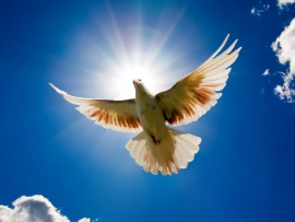 white_dove_flying_against_blue_sky-t2