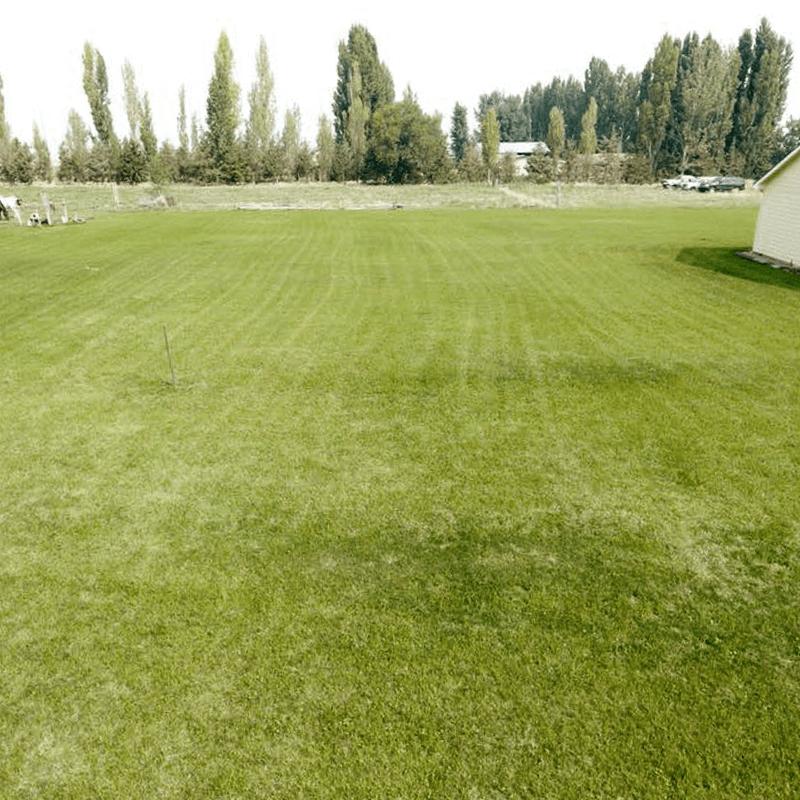 lawn mantanance