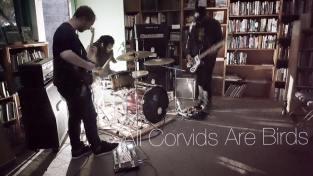 All Corvids Are Birds (Monterey)