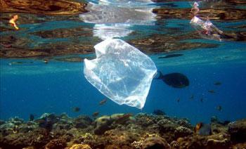Contaminación por bolsas de plástico