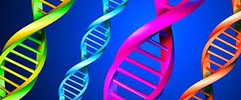 Seguimos con tu genética