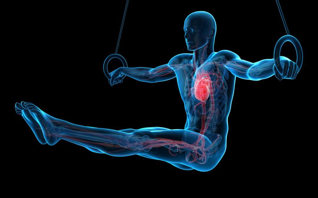 ¿Qué enfermedades ve un angiologo cardovascular?