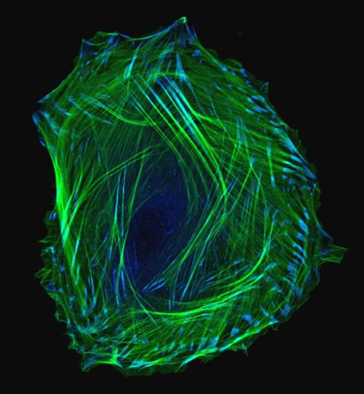 microscopic image of a cell.