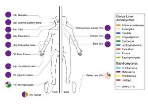 Line drawing of a human with pie charts of various degrees of purple fill adjacent to different areas of the body.
