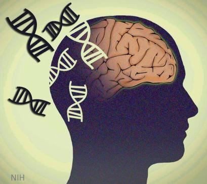 Illustration of a human head showing a brain and DNA