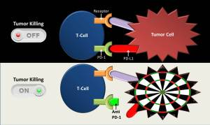 Anti-PD-1 Immunotherapy