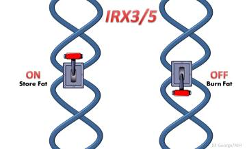Illustration of a DNA switch